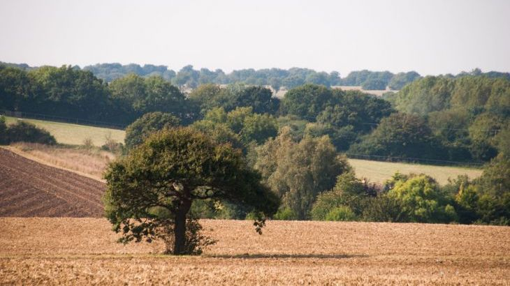 beautiful Suffolk countryside