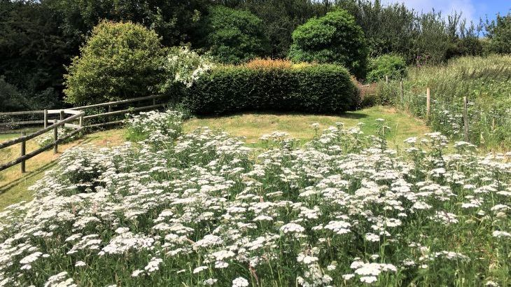 Nature planted gardens at Dittiscombe Hills Estate