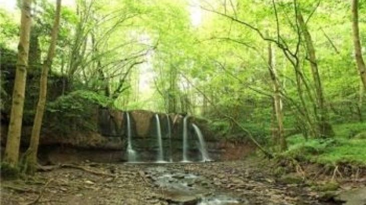 Waterfall in our woodland
