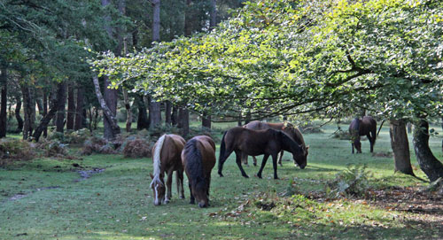 self-catering holidays new forest