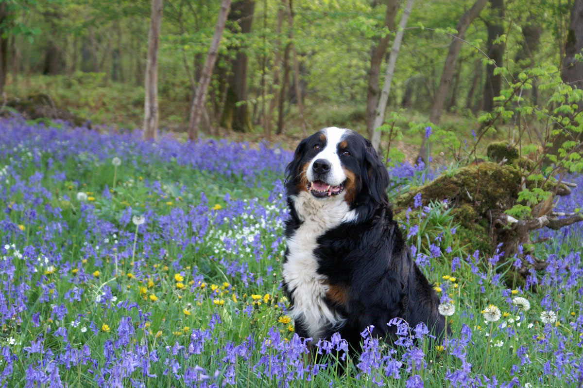 Forest of Bowland dog-friendly holidays