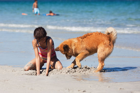 dogs welcome holiday homes UK